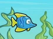 Fish Race Champions